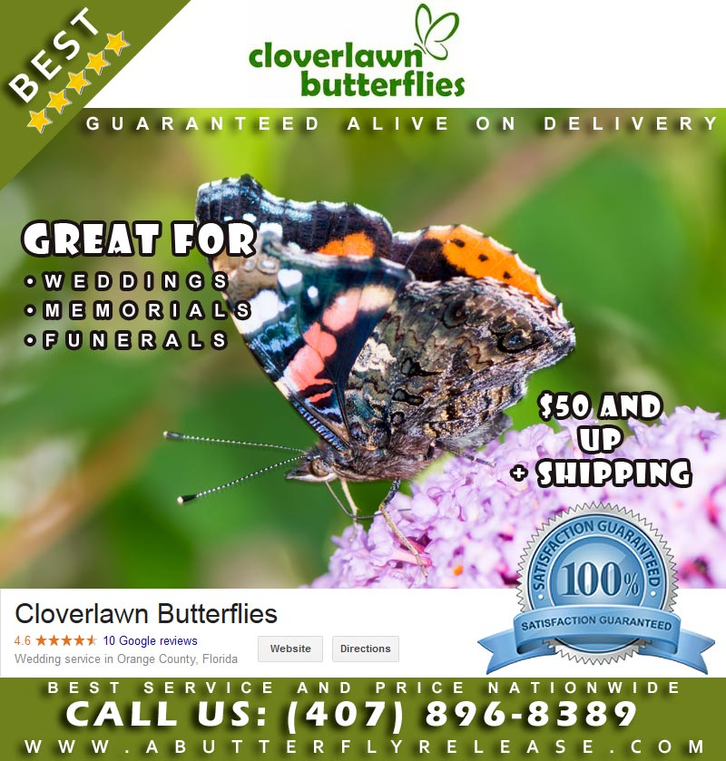 Buy Live Butterfly Release Packages from Cloverlawn Butterflies Butterfly Release Company